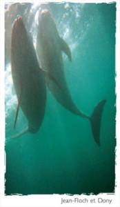 Le dauphin est menacé
