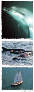 Les objectifs de l'institut Dony pour les dauphins