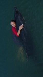 Se relier à l'énergie des dauphins