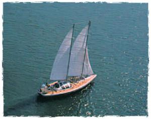 Institut Dony pour les dauphins, voyage voilier
