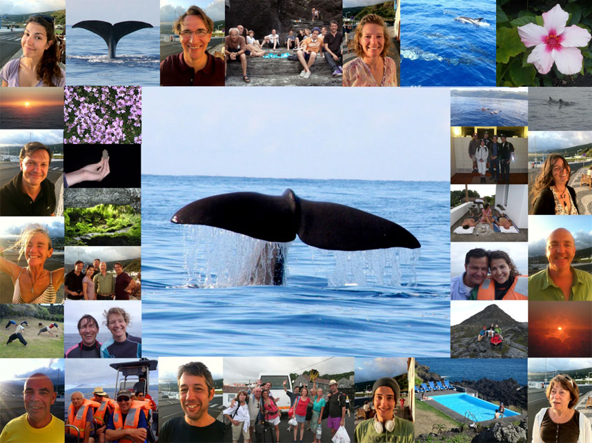 plonger nager dauphins baleines