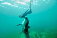 Frédérique Pichard et le dauphin Dony