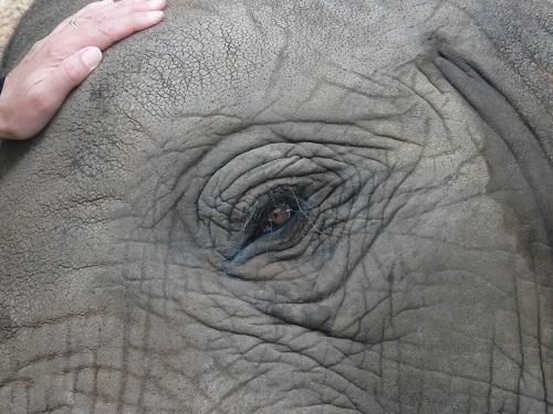 Rencontre éléphant ambassadeur, Afrique du Sud