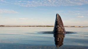 Voyage Mexique baleine