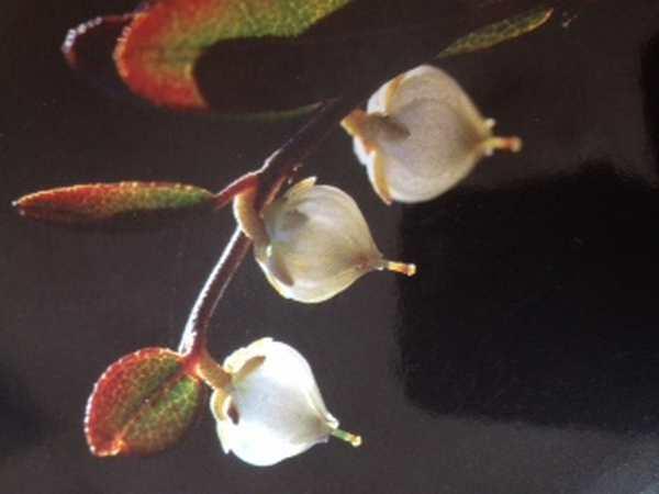 Elixirs floraux, formation Irlande