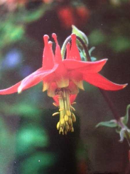 Formation élixir floral Irlande