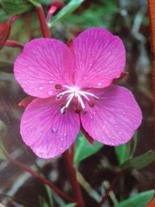 Formation elixirs floraux Irlande