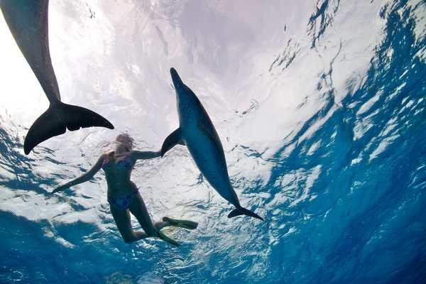 Nager avec dauphin Bahamas, Hawaï