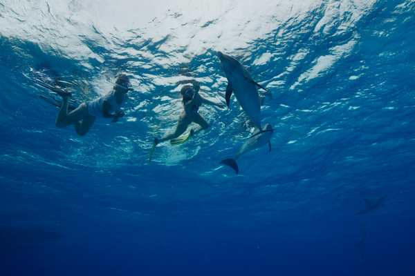 Rencontrer dauphin Hawaï, Bahamas, voyage sur mesure