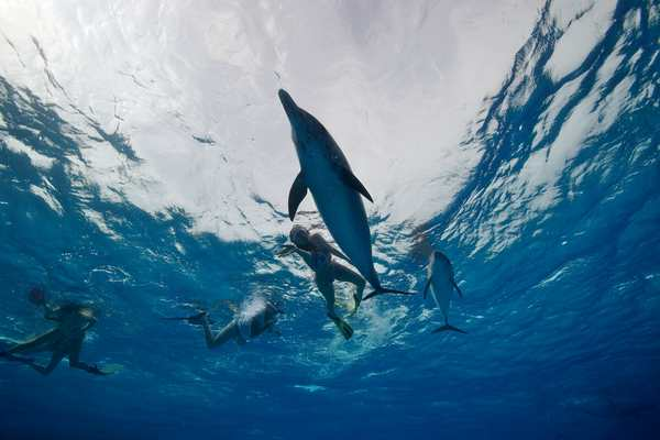 Voyage rencontre dauphin, nager avec dauphin, Bahamas, Hawaï