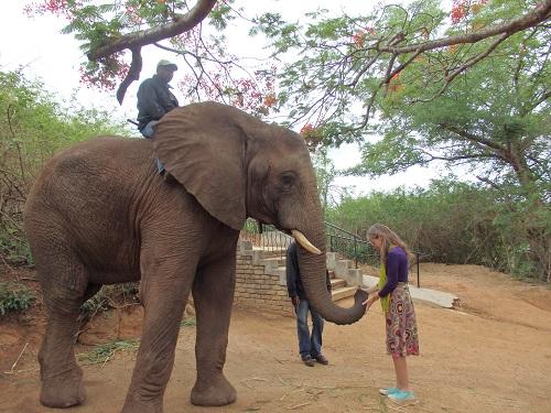 Rencontre éléphant ambassadeur