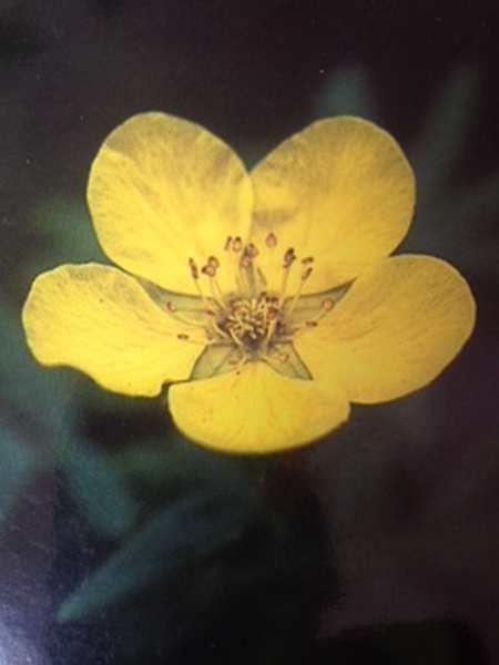 Découverte élixirs floraux, stage Irlande