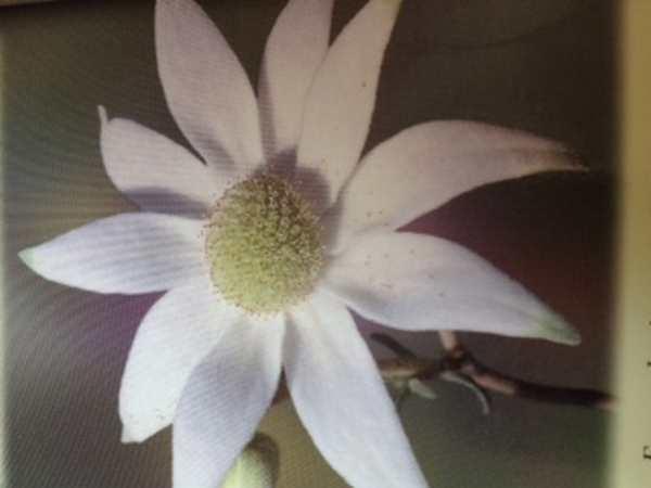 Formation élixirs floraux Irlande