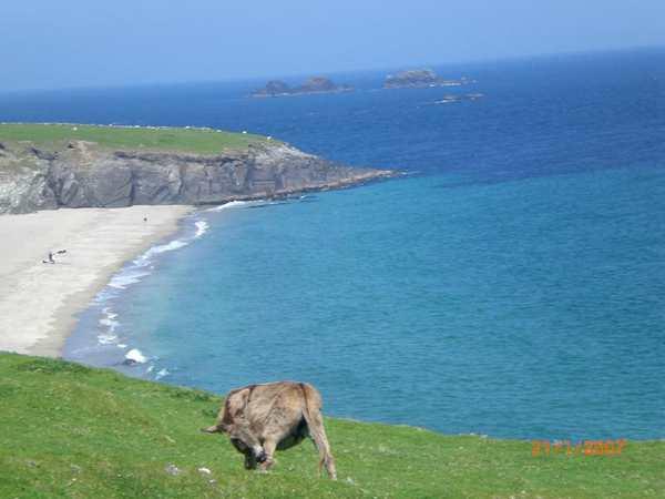 Rencontre avec dauphin Irlande